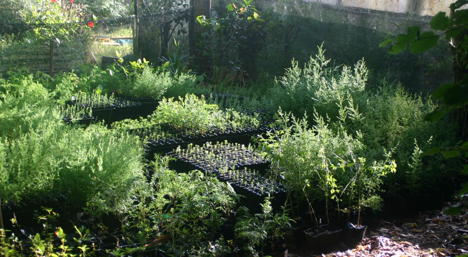 Welcome To The Organic Online Tree Nursery We Supply Strong Forestry Seedlings Shelter And Fruit Plants Check Them Out In Catalogue